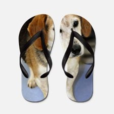 beagle10x14 Flip Flops