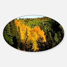 Pine tree Aspen canyon Sticker (Oval)