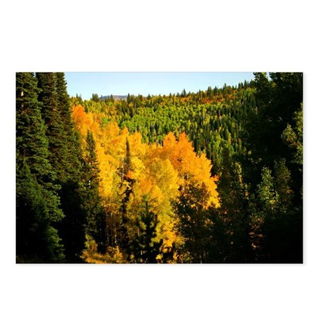 Pine tree Aspen canyon Postcards (Package of 8)