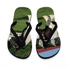 Mickey Stallion Tack Flip Flops