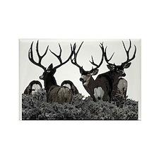 Monster buck deer Rectangle Magnet