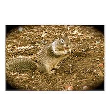 bigcheekssquirrel1 Postcards (Package of 8)