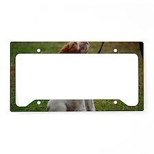 DSC_0273 License Plate Holder