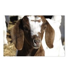 Cute kid goat Postcards (Package of 8)