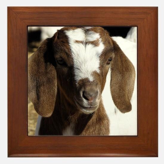 Cute kid goat Framed Tile