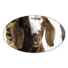 Cute kid goat Decal