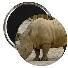 rhino 1 Magnet