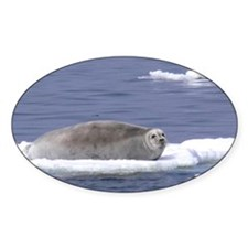 bearded seal on ice Decal