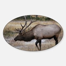 Bull Sticker (Oval)