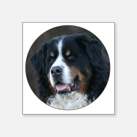 "bernese_round Square Sticker 3"" x 3"""
