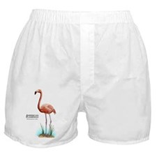 American Flamingo Boxer Shorts