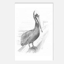 Pelican Pencil Drawing by Postcards (Package of 8)