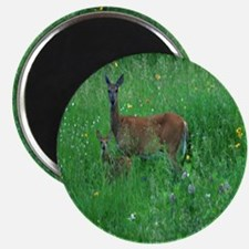 forty fourth download 030 ed glass Magnet