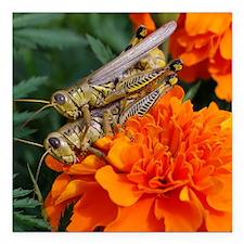 "grasshopperlove Square Car Magnet 3"" x 3"""