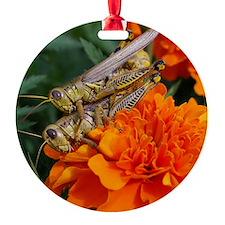 grasshopperlove Ornament