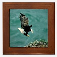 eagle_nest_cafe Framed Tile