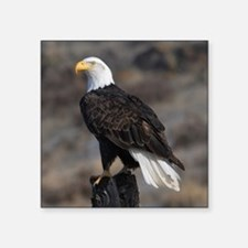 "bald_eagle_cafe Square Sticker 3"" x 3"""