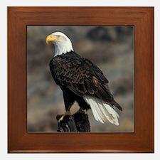 bald_eagle_cafe Framed Tile