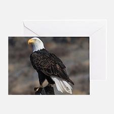bald_eagle_cafe Greeting Card