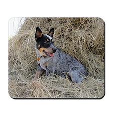 Australian Blue Heeler Pup Mousepad
