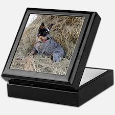 Australian Blue Heeler Pup Keepsake Box