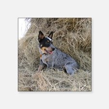 "Australian Blue Heeler Pup Square Sticker 3"" x 3"""