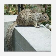 Squirrel8X10 Tile Coaster