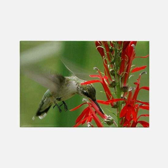 hummingbird_cafepress Rectangle Magnet