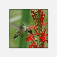 "hummingbird_cafepress Square Sticker 3"" x 3"""