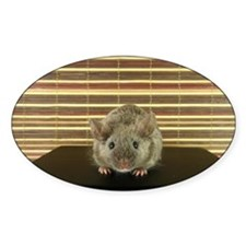 Mousey Decal