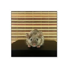 "Mousey Square Sticker 3"" x 3"""