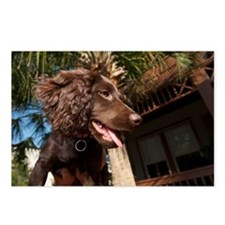 Boykin Spaniel Puppy Postcards (Package of 8)