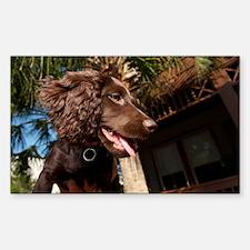Boykin Spaniel Puppy Decal