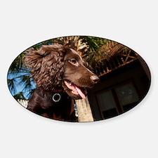 Boykin Spaniel Puppy Sticker (Oval)