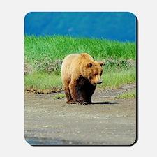 5x8_journal_bear_2 Mousepad