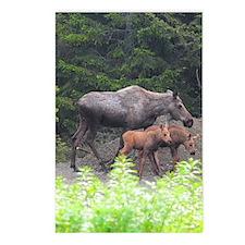 5x8_journal_moose_2 Postcards (Package of 8)