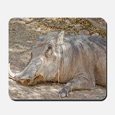 Warthog In Repose Mousepad