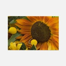Orange Sunflower Rectangle Magnet