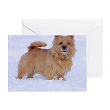 norwich_terrier_1_nelio Greeting Card