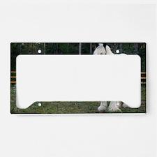 Gypsy Vanner Horses Rose Peta License Plate Holder