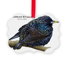 European Starling Ornament