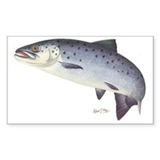 Salmon 1 Decal