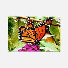 Monarch Butterfly Wall Calendar P Rectangle Magnet