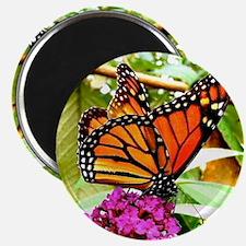 Monarch Butterfly Wall Calendar Page, Calen Magnet