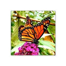 """Monarch Butterfly Wall Cale Square Sticker 3"""" x 3"""""""
