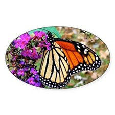 Monarch Butterfly Wall Calendar, Ca Decal