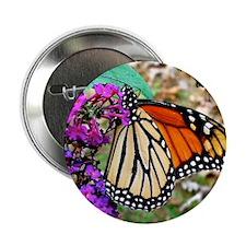 """Monarch Butterfly Wall Calendar, Cale 2.25"""" Button"""