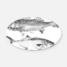 striperand bluefish Oval Car Magnet