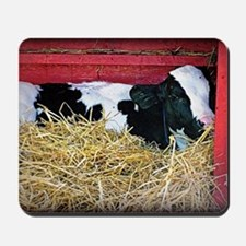 Cow Photo Mousepad