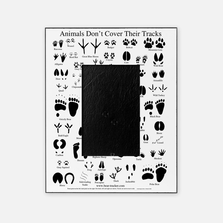 animal tracks poster 8 5 by 11 Picture Frame